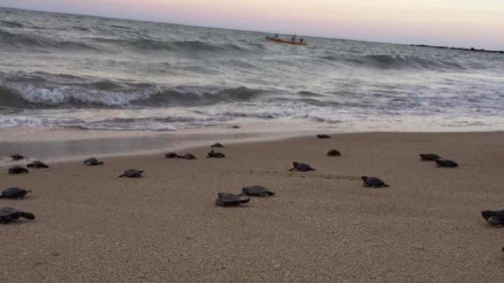 70,000 Sea Turtles Nested on Deserted Beaches Due to Covid-19